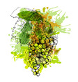 Colored hand sketch grapes vector image vector image
