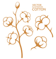 Cotton vector image vector image