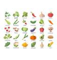 large set named colorful vegetables on white vector image