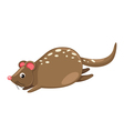 Quoll isolated on white background vector image vector image