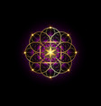seed life sacred geometry gold flower life vector image vector image