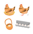 egg story with hen vector image vector image