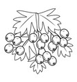 the branch is a beautiful currant berries vector image vector image