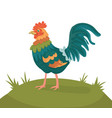 cheerful cartoon rooster on meadow vector image vector image