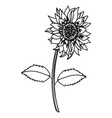flower with leaves drawing vector image vector image