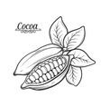 Hand drawn cocoa bean vector image vector image