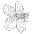 hibiscus line two vector image vector image
