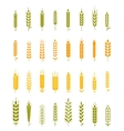 Set of simple and stylish Wheat vector image vector image