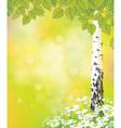 birch tree flower vector image vector image
