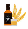premium quality whiskey bottle wheat spikelet vector image