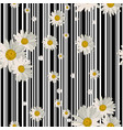 seamless pattern with beautiful white daisy vector image vector image