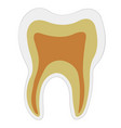 anatomical shape tooth dentin enamel pulp vector image vector image