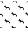 dog with elizabethan collar icon in black style vector image