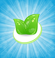 Eco friendly card with green leaves and blue rays vector image vector image