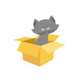 cat in box isolated home pet in cardboard box vector image