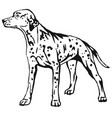 decorative standing portrait of dog dalmatian vector image vector image