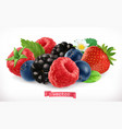 forest fruits and berries raspberry strawberry vector image