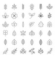 leaves and branch icon set thin line design vector image