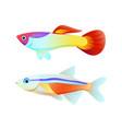 neon tetra and guppy fish color informative poster vector image vector image