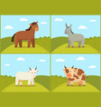 set of domestic animals color vector image vector image