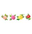 lovely rose flower vector image vector image