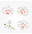 orchid phalaenopsis white flowers tropical plants vector image vector image