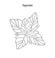 peppermint outline vector image