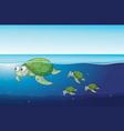 sea turtles swimming in the ocean vector image vector image