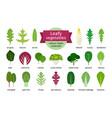 green vegetables leaf set vector image