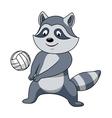 Cartoon raccoon with volleyball ball vector image