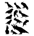 cockatoo birds animal detail silhouettes vector image