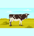 cute white and black spotted cow on meadow vector image