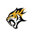 logo tiger vector image