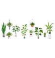 pot plant set plants plastic decorative container vector image vector image