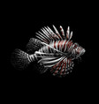 tropical fish portrait of a lionfish on a black vector image