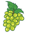 a bunch green grapes or color vector image vector image
