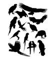 condor and parrot birds animal detail silhouettes vector image vector image