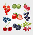 fruit strawberry food red sweet berry cherry fig vector image