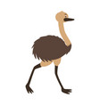 emu fauna on white background vector image