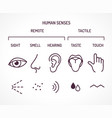 five basic human senses vector image vector image