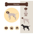pointer dog breed infographic vector image vector image