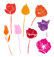 set tulips colorful vector image