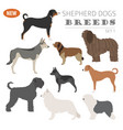 shepherd dog breeds sheepdogs set icon isolated vector image vector image
