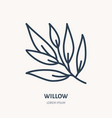 willow flat line icon medicinal plant leaves vector image vector image