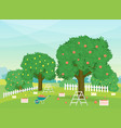 cartoon autumn rural garden outdoor scene vector image