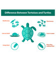 difference between tortoises and turtles vector image vector image