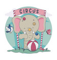 elephant playing ball in circus with bird vector image