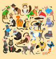 pattern with cats dressed in costumes vector image