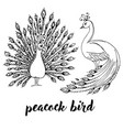 peacocks birds doodle black contour vector image vector image