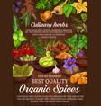 seasoning spice and herbs condiments vector image vector image